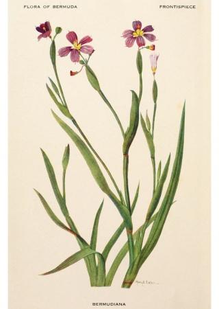 Flora of Bermuda