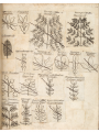 Medical botany 