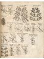 Medical botany