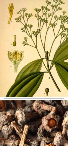 Cinnamomum aromaticum/cassia